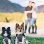 Unchewable Leash: Your Dogs Will Not Break These Leashes!