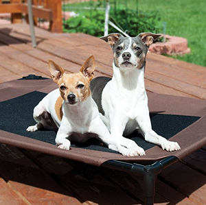 Best Elevated Dog Bed for Your Dogs!